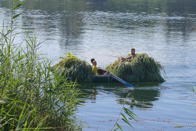Cargo of Wheat