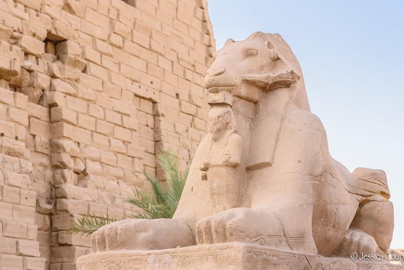 Ram Headed Sphinxes
