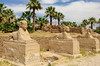The avenue of Sphinx at the restored ruins of the Luxor Temple in Luxor, Egypt.