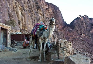 mount-sinai-camel-hike-7