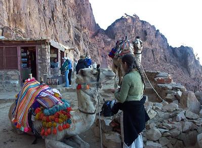 mount-sinai-camel-hike-8