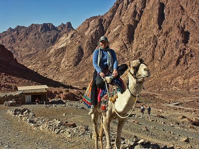 mount-sinai-camel-hike-4