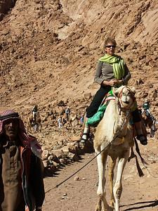 mount-sinai-camel-hike-2