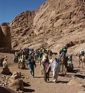 mount-sinai-camels