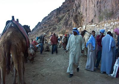 mount-sinai-camel-hike-10