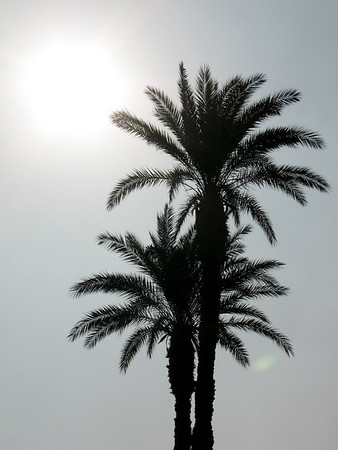 Sun over Palms in Cairo 2007