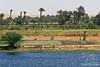 Nile Farming
