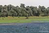 Pastoral Nile