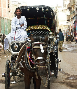 egypt-carriage-driver