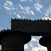 colony of pigeons roost in safety in the evening on the tops of giant columns at thebes near Luxor, Egypt