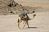 Desert Camel Rider