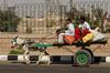 Two boys on a donkey cart transport fresh produce near Aswan, Egypt.