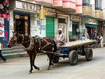 horse-luxor-egypt