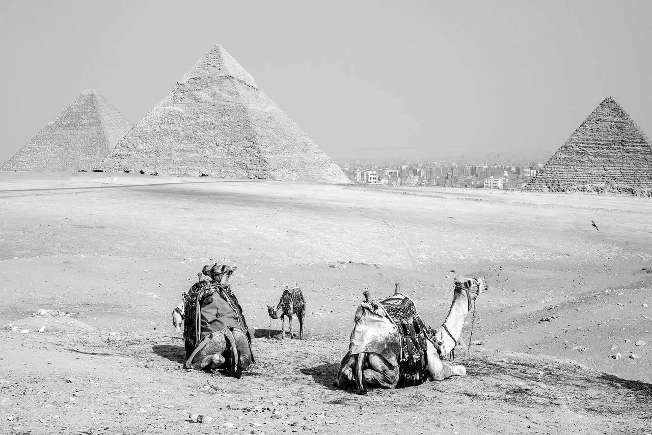 Pyramids of Giza and Camels