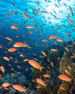 Red Sea Color