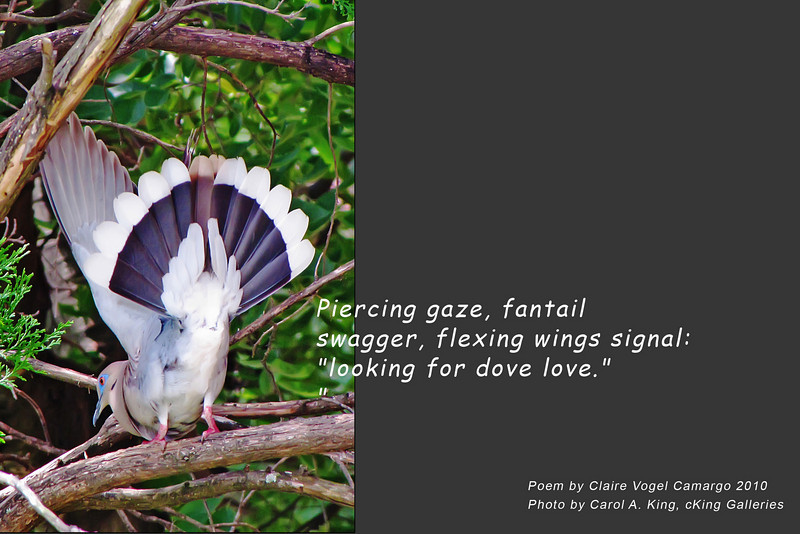 """Photo without poem available for sale at:<br />  <a href=""""http://ckinggalleries.smugmug.com/Creatures-Great-and-Small/Feathered/12181534_zSWr7#903320388_ytxBV"""">http://ckinggalleries.smugmug.com/Creatures-Great-and-Small/Feathered/12181534_zSWr7#903320388_ytxBV</a>"""