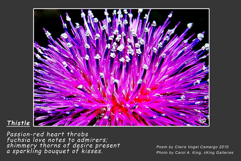 "Photo without poem for sale at:<br />  <a href=""http://ckinggalleries.smugmug.com/Flowers-and-Plants/Flowers-Wild/12293754_DwG2X#898775449_BcTmi"">http://ckinggalleries.smugmug.com/Flowers-and-Plants/Flowers-Wild/12293754_DwG2X#898775449_BcTmi</a>"