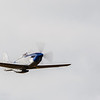 SE-XXA flyby