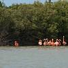 Flamingos near the town of Rio Lagartos