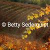 Boeger Winery in Fall