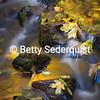 Apple Hill Stream in Fall