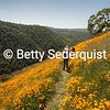 Hikers and Poppies