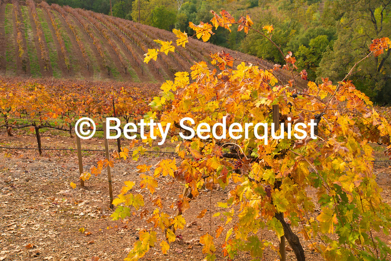 Boeger Winery vineyards in Fall