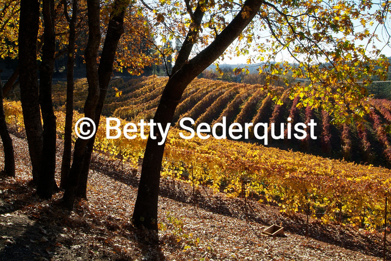 Autumn at Boeger Winery