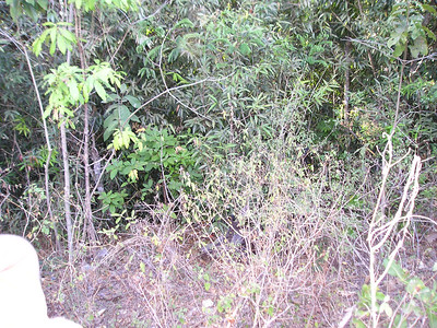 Rufina Amaya's hiding place as the soldier rode past, away from the massacre at el Mozote.  They thought the sounds they heard in the brush were those of a ghost.