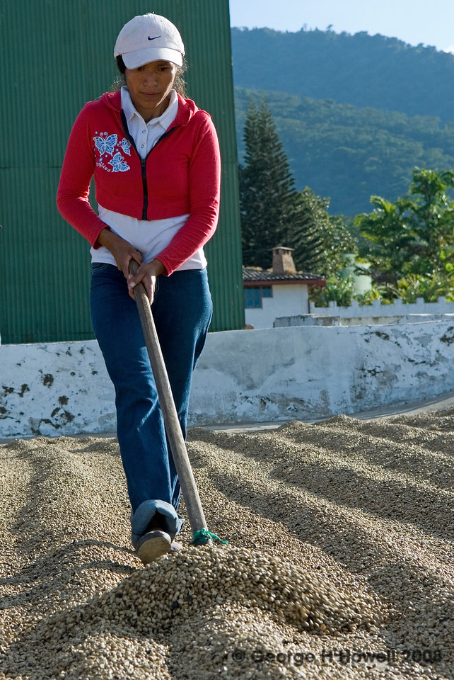 It has always been men doing this raking.  The owner of Las Cruces, Jose Antonio Salaverria, is now changing this tradition....
