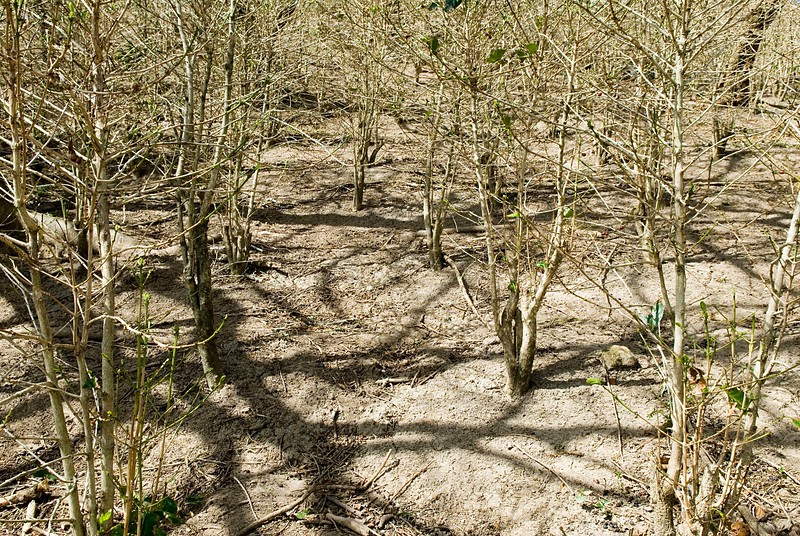 The soil has lost all protective covering and is heated by the sun.