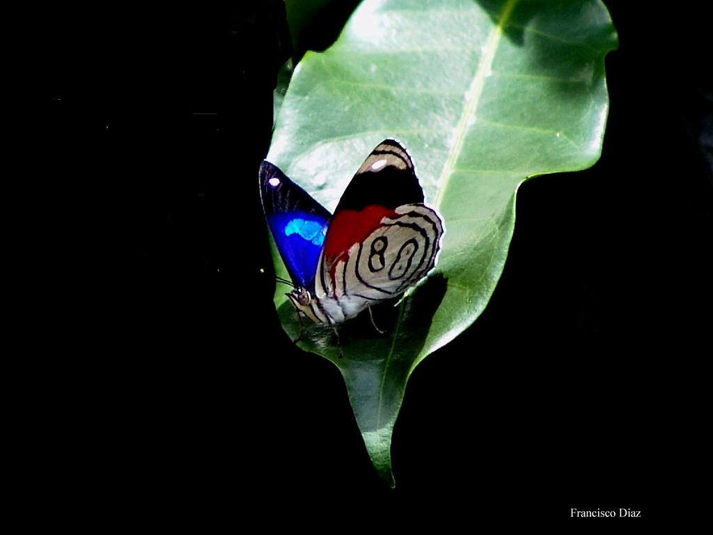 On a coffee leaf.  Photo by Francisco.