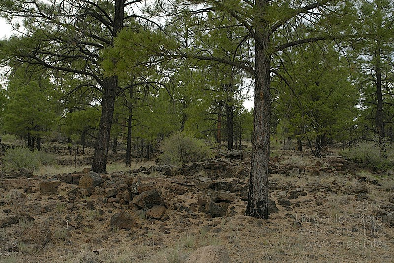 Lava Flow, Cibola Forest