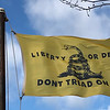 February 25, 1919 -- Gadsden Flag