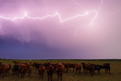 """The Herd""  Western TX Technical Details: Shot with Canon 5d MK2 and Canon 24-70L lens."