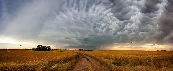 """Fields of Gold""  North West Oklahoma Technical Details: Shot with Canon 5d mk2 and Canon 24-70mm lens at F10 and 1/8.    Panorama created from 10  vertical shots."