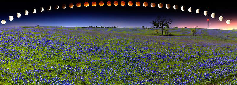 """Blood Moon Bluebonnets""  Ennis, TX This incredible bluebonnet field is located in Ennis, TX.  In 2014 we had the unique opportunity to get out and shoot the bluebonnets with the full lunar eclipse over them.  This is the result. Technical Details: Shot with Canon 6d and Canon 24-105mm lens."