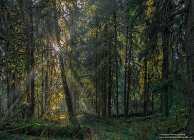 En lo mas profundo del bosque / Deep in the forest