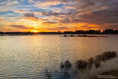 Resplandores marismeños / Radiances  marsh