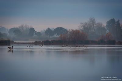 Rincones de la marisma / Corners of the marsh