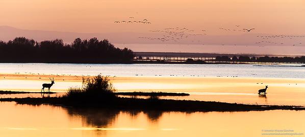 El despertar de la marisma  / The awakening of the marsh