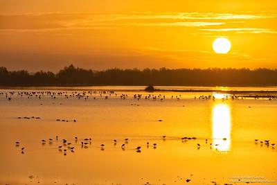 La llamada de la marisma / The call of the marsh