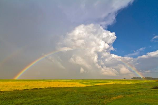 Regenbogen No.  42-51066241