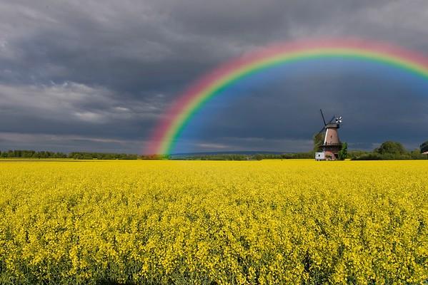 Regenbogen No.  42-50687671