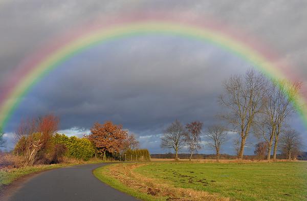 Regenbogen No.  42-50533702