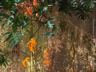 Jungle Plants on Boulder