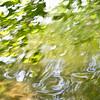 Wasser grün Zweige, green water, twigs, 6540