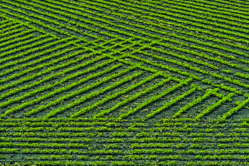 Mid-north Indiana.   Field patterns formed by crops.