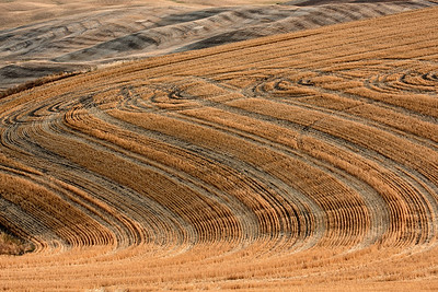 The patterns and rolling hills of the Palouse fields at harvest time as viewed from Steptoe Butte, Steptoe Butte State Park, Washington, USA
