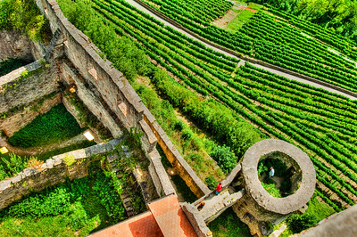Neckar Valley, Germany.  Vineyard and ruins.